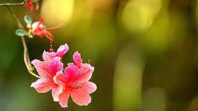 12首描写杜鹃花的古诗词