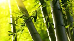 千磨万击还坚劲,任尔东西南北风,5首描写竹子的古诗词