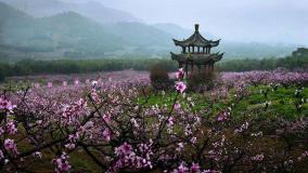 30句描写桃花的诗句